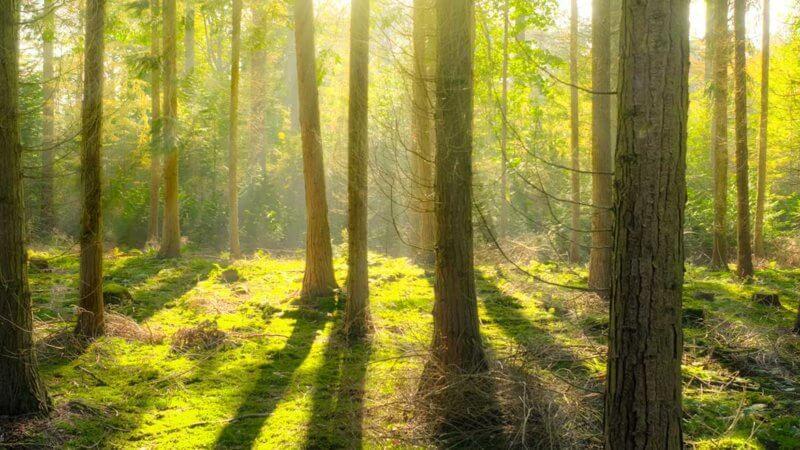 【TIPS】デジタルデトックス森林浴のすすめ