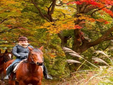 星のや軽井沢「脱デジタル滞在」紹介 ~馬と触れ合う~